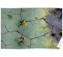 drifted leaf Poster