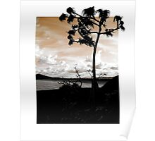 Pandanus Skies (Bordered) Poster