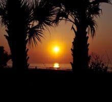 Palmetto Sunrise Sticker
