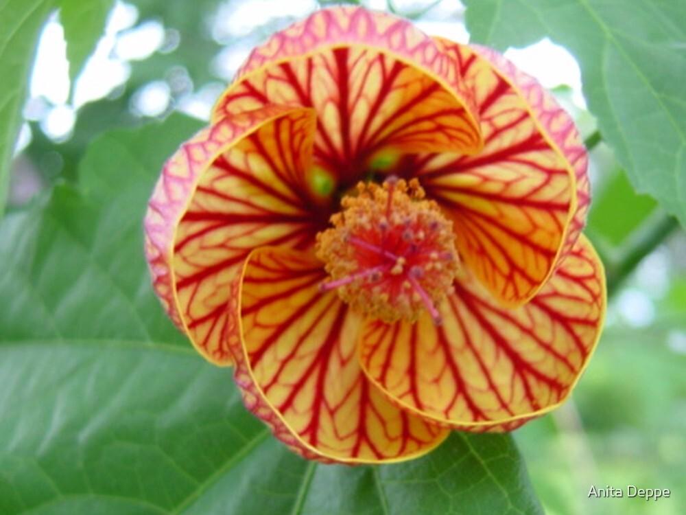 Malawi: nice flower by Anita Deppe