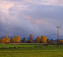 the view from here... pastoral Oregon #2 by Allan  Erickson