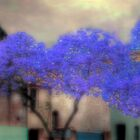 Jacaranda by Mark Richards