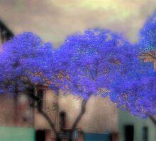 Jacaranda by Mark Richards