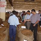 Malawi: tobacco auction by Anita Deppe
