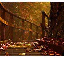 red light autumn by Stankina