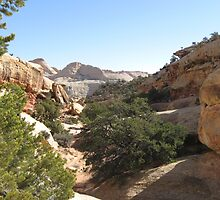 View from Frying Pan Trail by whittie011