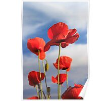 red poppies and blue sky Poster