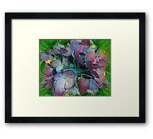 French Hydrangea Rainbow Framed Print
