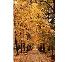 Autumn park alley. Photographic Print