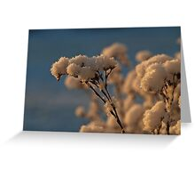 Frosty Morning (I) Greeting Card