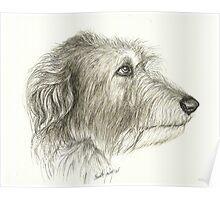 Irishwolfhound Ink 11x14 Poster