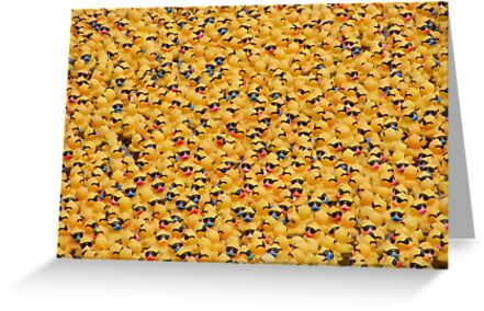 Ducks, ducks, ducks and, er, ducks. by David Dutton