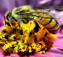 Bee~utiful by Carla Jensen