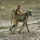 Baboon  by Marieseyes