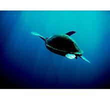Turtle, Tenerife Photographic Print
