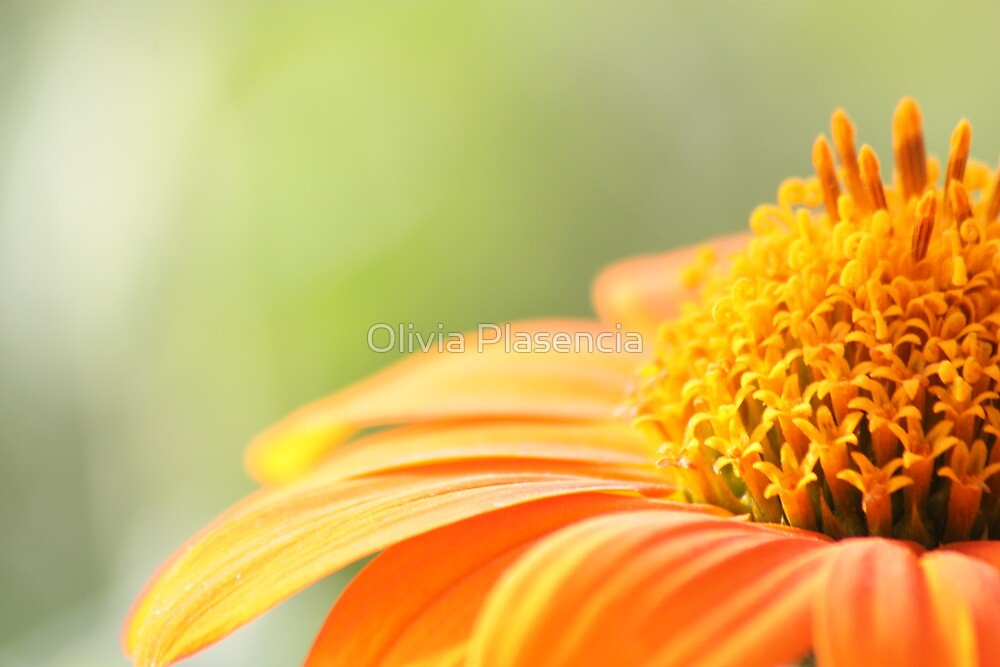 Fall's Flower by Olivia Moore
