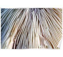 Fungi detail Poster