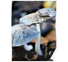 Mycena Fungi Poster