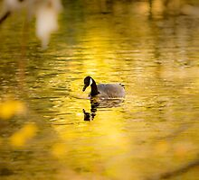Local Resident Takes a Swim on Golden Pond by Ken Fortie