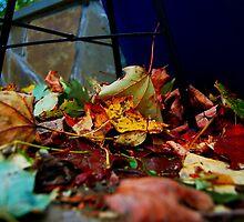 Leaf House by Rob Loftus