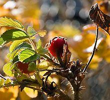 The Autumn Light by DeerPhotoArts