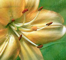 2010 Flowers & Textures Calendar by DeerPhotoArts