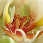 Orchid Stamen Macro by PurelyPrime