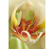 Orchid Stamen Macro Photographic Print