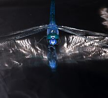 Dragonfly electric by brevans