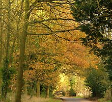 Autumn Road Home by Lisa Williams