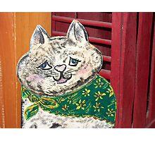 Rachel's Cat Photographic Print