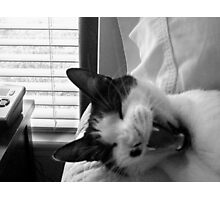 Monroe Yawning - Cat Photographic Print