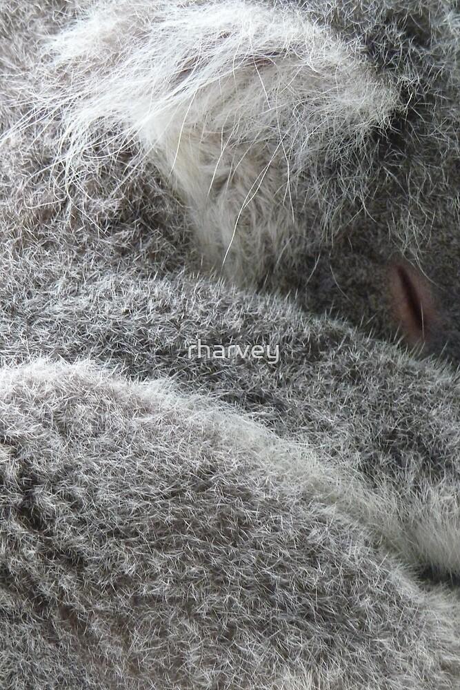 Sleeping Koala by rharvey
