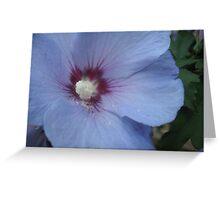 Wedgewood Flora Greeting Card