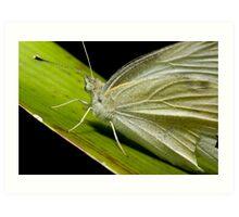 Green Butterfly macro Art Print