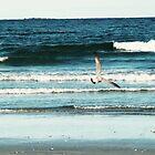Gull by Elemental523