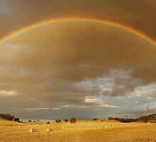 Rainbow Hay by Peter Hodgson