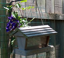 Birdhouse and Blue Flower by sandycarol
