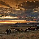 Iceland -  truancies by Patrycja Makowska