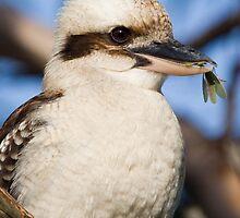 Australian Kookaburra eating preying mantis by PurelyPrime