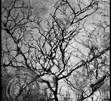 Winter Solstice by Brightnewthings