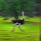 Run Ostrich by miroslava