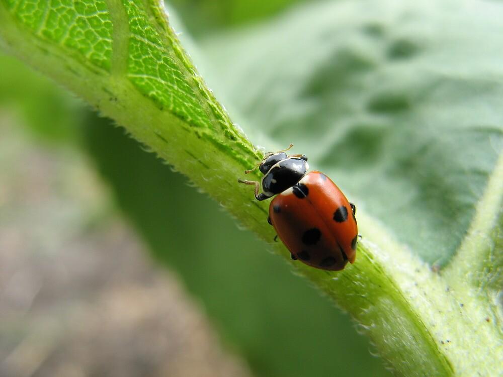 Ladybeetle by RobynHButler