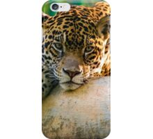 Animal iPhone Case/Skin