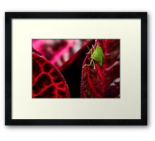 Colourblind - a lost insect Framed Print