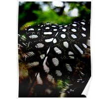 Guinea Fowl Feather Poster