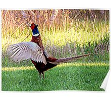 Wing flaps up Poster
