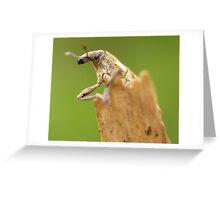 Cuddly bug Greeting Card