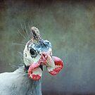 A Bird a Chicken a hmmmm.... by Susanne Correa