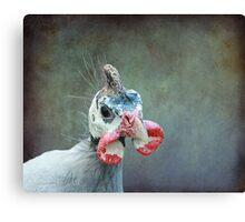 A Bird a Chicken a hmmmm.... Canvas Print